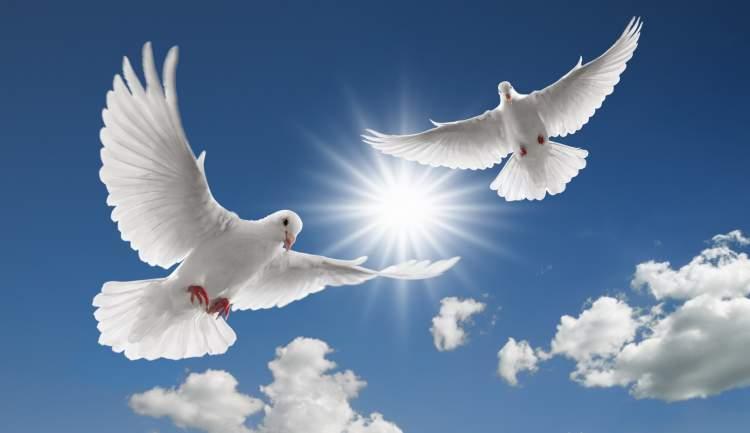 beyaz güvercin uçurmak