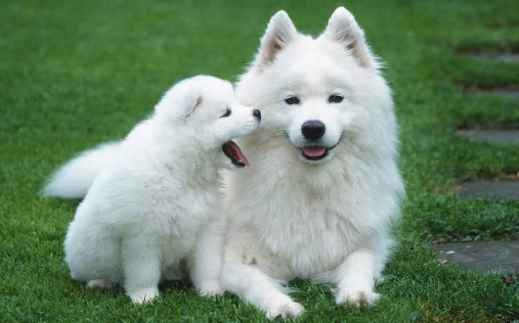 beyaz köpek saldırması