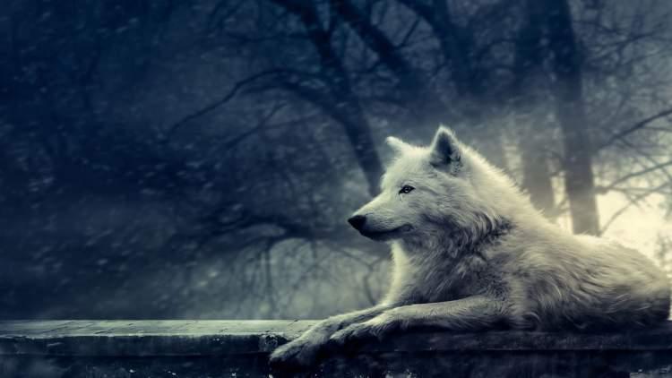 Rüyada Beyaz Kurt Görmek