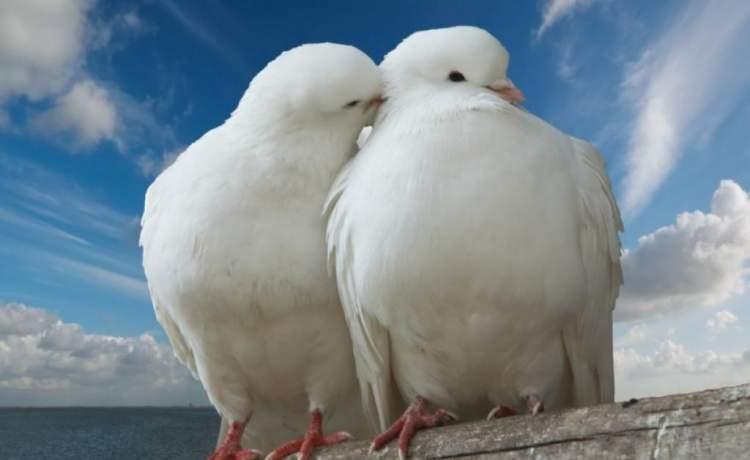 beyaz kuşlar görmek
