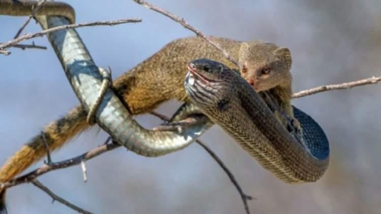 birinin yılan öldürdüğünü görmek