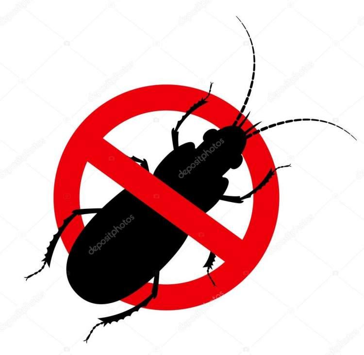 böcek öldürmek