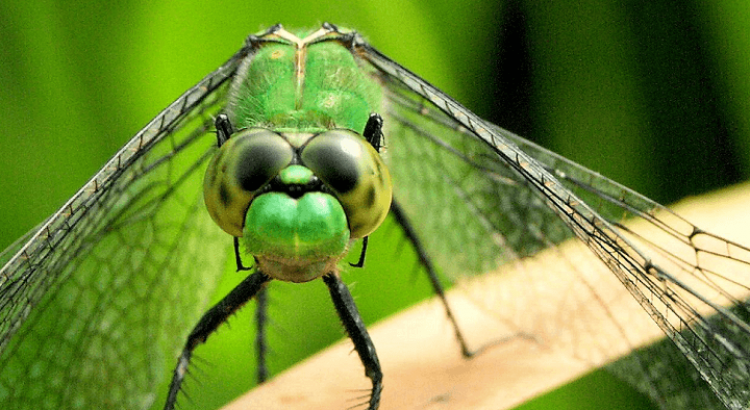 böcek öldürmeye çalışmak