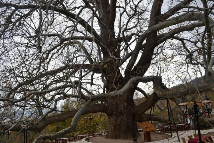 Rüyada Büyük Ağaçlar Görmek