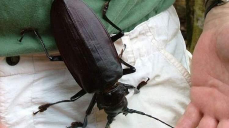 Rüyada Büyük Kara Böcek Görmek
