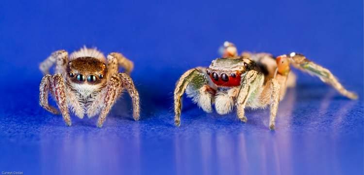 büyük örümcekler görmek