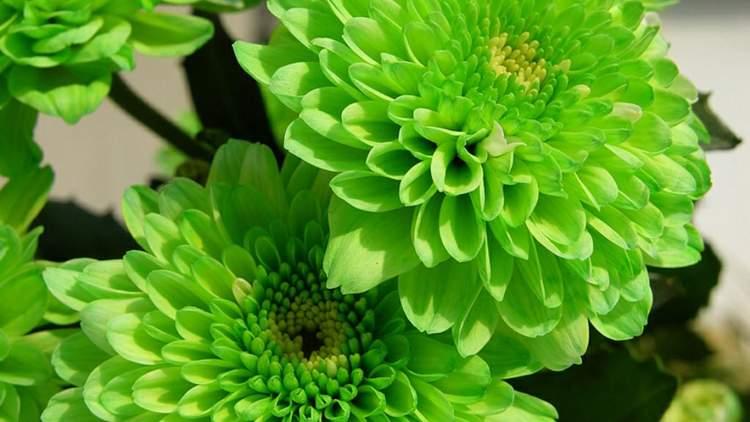 canlı yeşil çiçek görmek