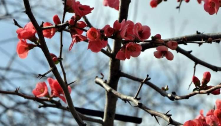 çiçek açan ağaç görmek