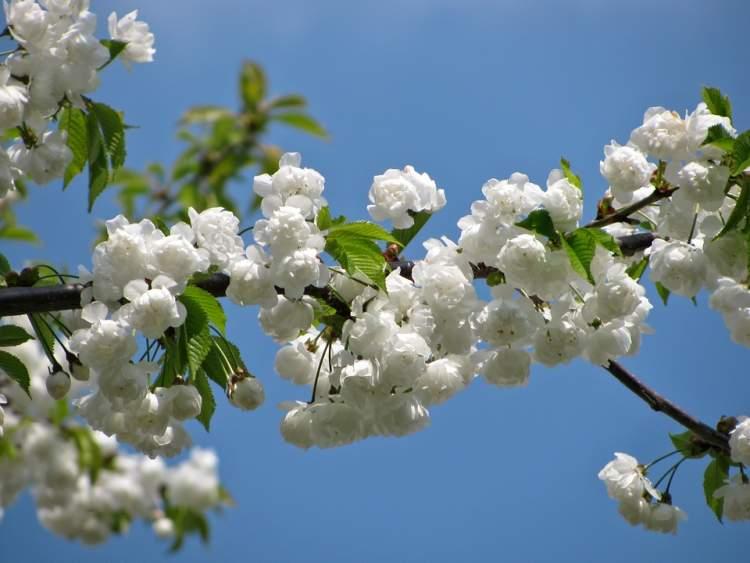 Rüyada Çiçek Açmış Ağaçlar Görmek