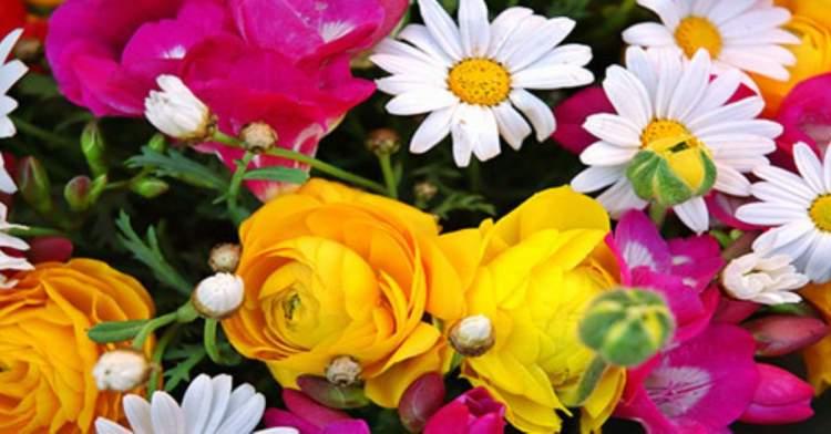çiçek çalmak