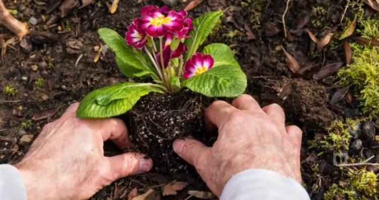 çiçek ektiğini görmek
