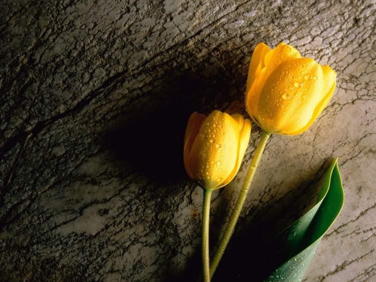 çiçek kırılması