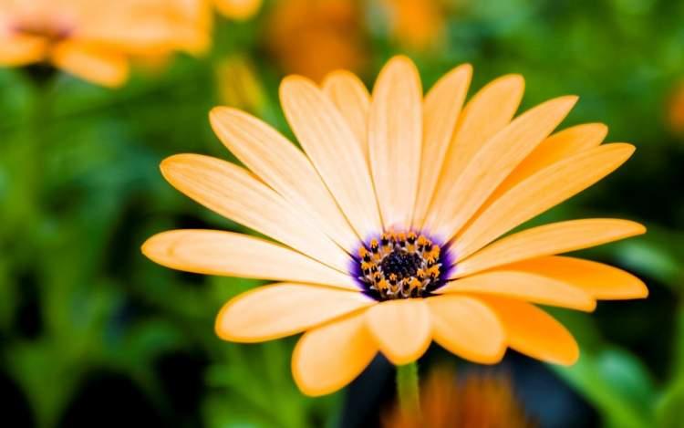 çiçek koparmak