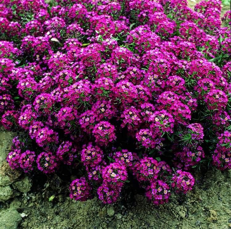 çiçek tohumu toplamak