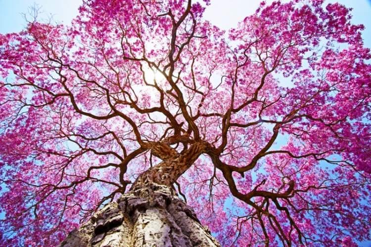 çiçekli ağaç görmek