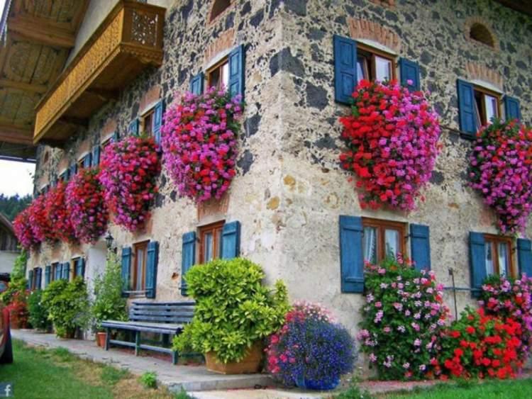 çiçekli ev görmek