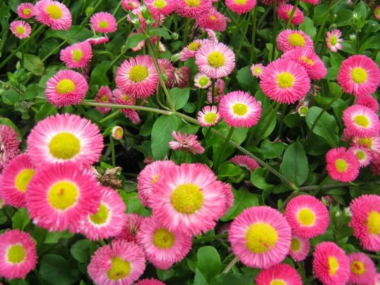 çok çiçek görmek