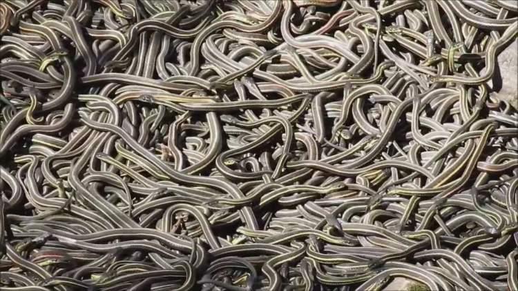 çok yılan görmek