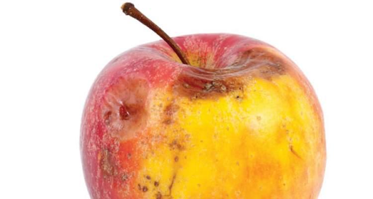 çürük elma yemek