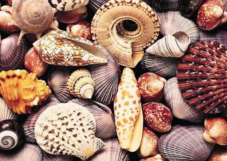 deniz kabuğu topladığını görmek