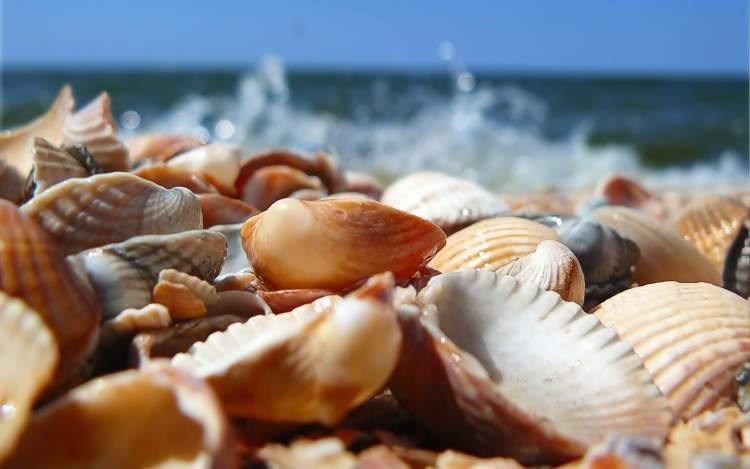 deniz kabuğu toplamak