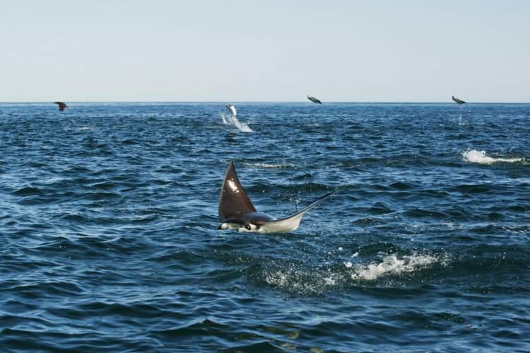 Rüyada Denizin Üstünde Uçmak