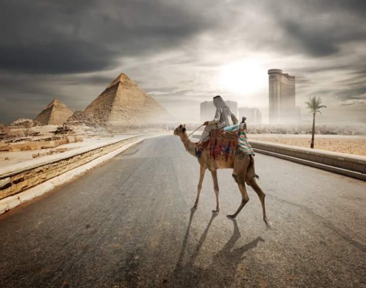 deve kovalaması