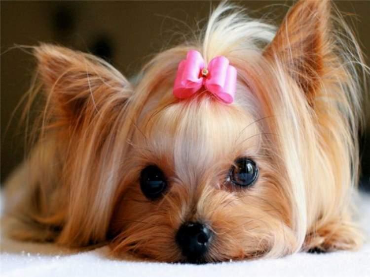 Rüyada Dişi Köpek Görmek