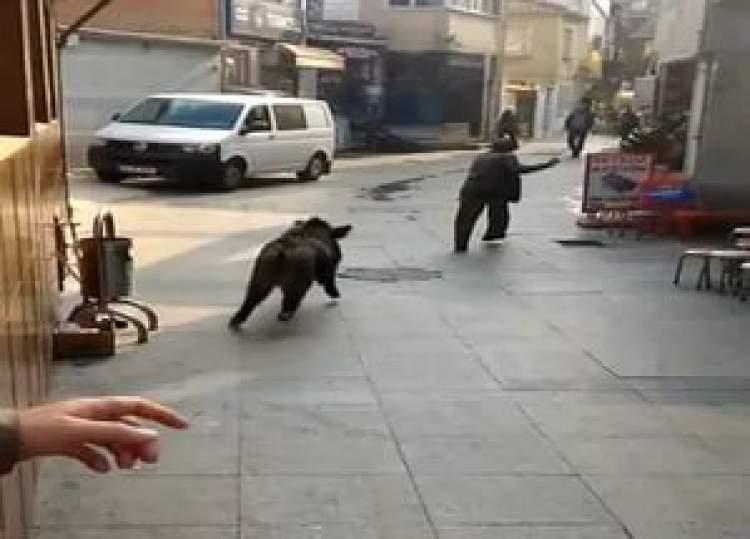domuz tarafından kovalanmak