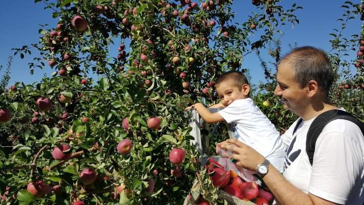 elma ağacından elma koparmak