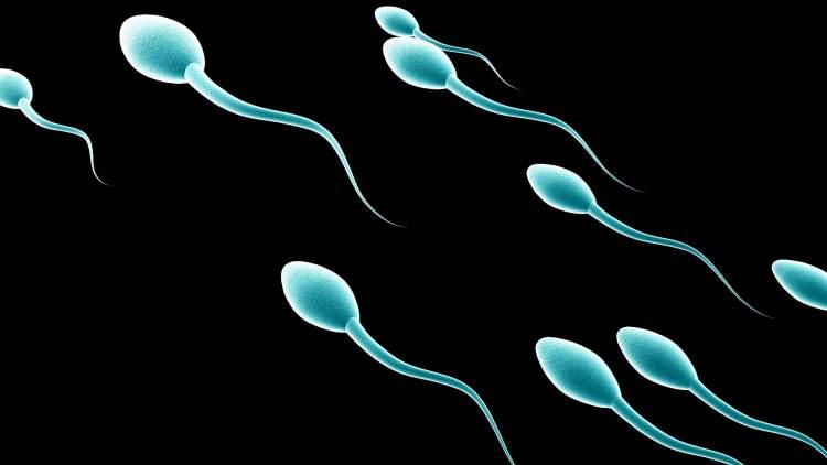 erkek spermi görmek