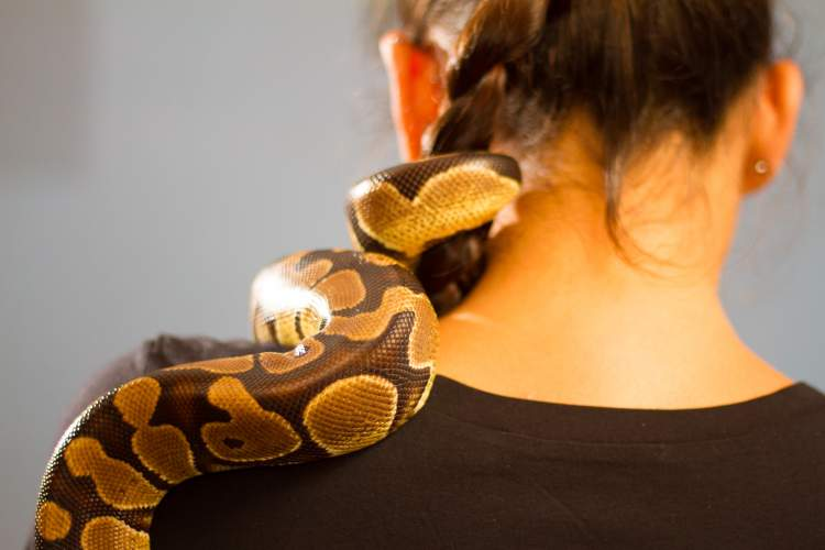 evcil yılan görmek