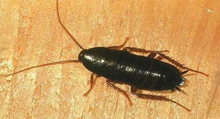 evde böcek öldürmek