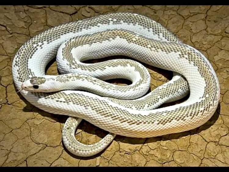 evde yılan görmek