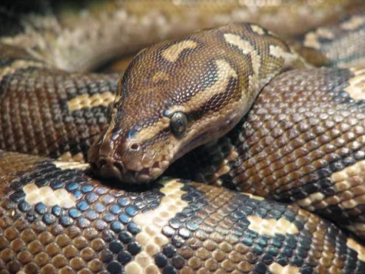 evde yılan öldürmek