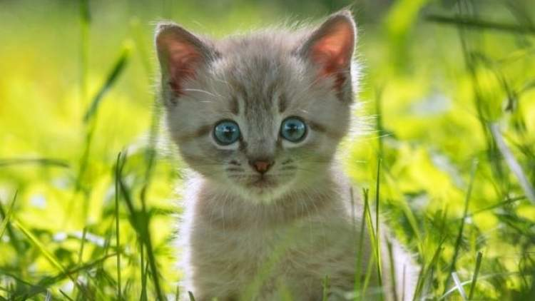 Rüyada Evden Kedi Atmak