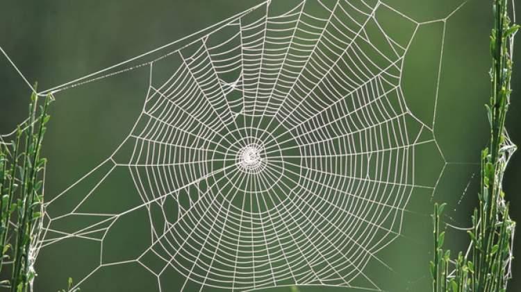 Rüyada Evi Örümcek Ağı Sarması