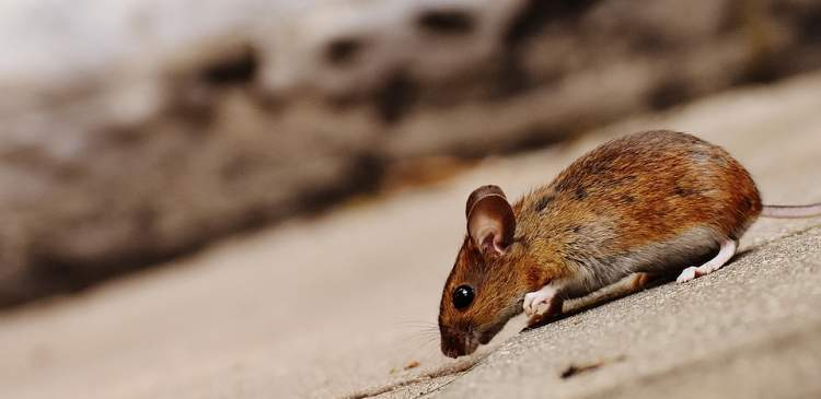 fare ısırdığını görmek