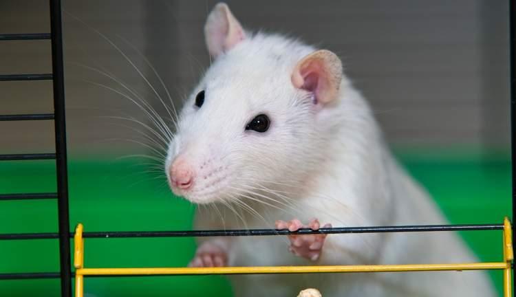 fare ısırması
