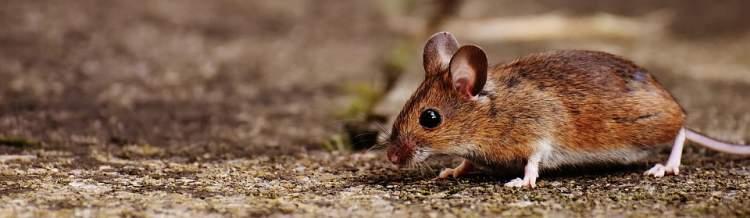 fare ısırmasını görmek