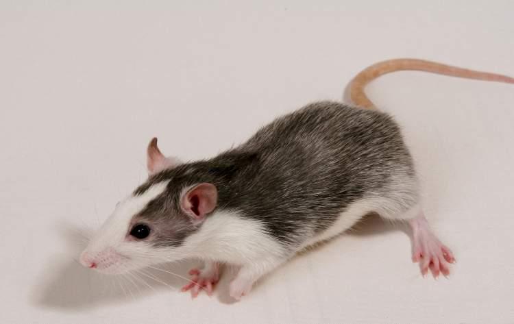 fare öldüğünü görmek
