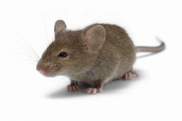 fare öldürdüğünü görmek