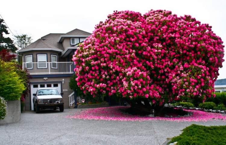 Rüyada Gül Ağacı Dikmek