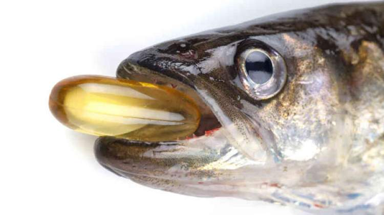 hamile balık görmek