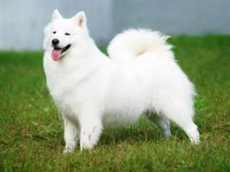 Rüyada Havlayan Köpek Görmek