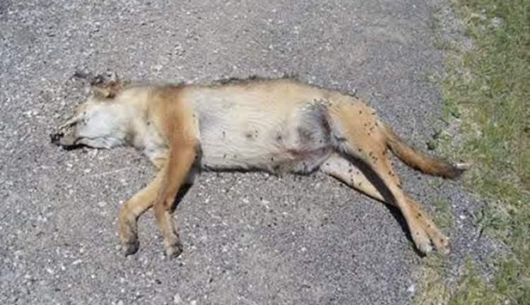 hayvan öldürmek