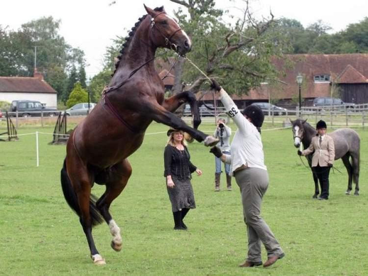 hırçın at görmek