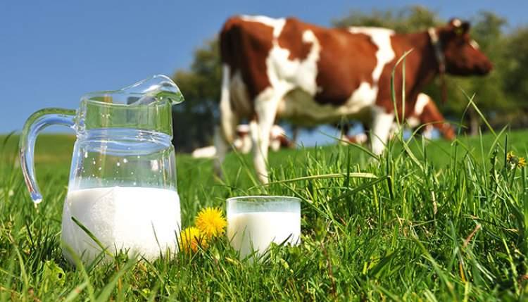 Rüyada İnek Süt Görmek