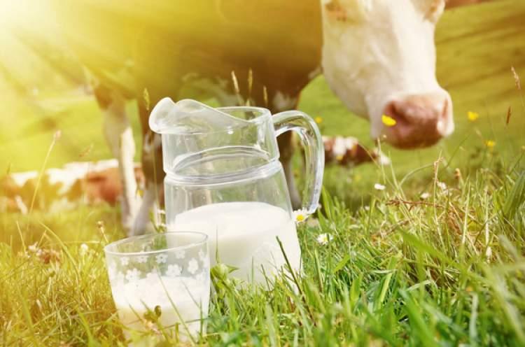 Rüyada İnek Sütü Almak