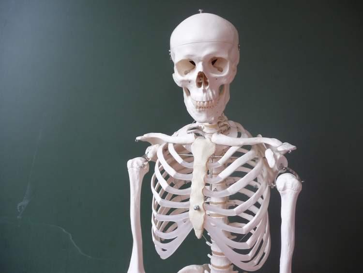 insan iskeleti görmek